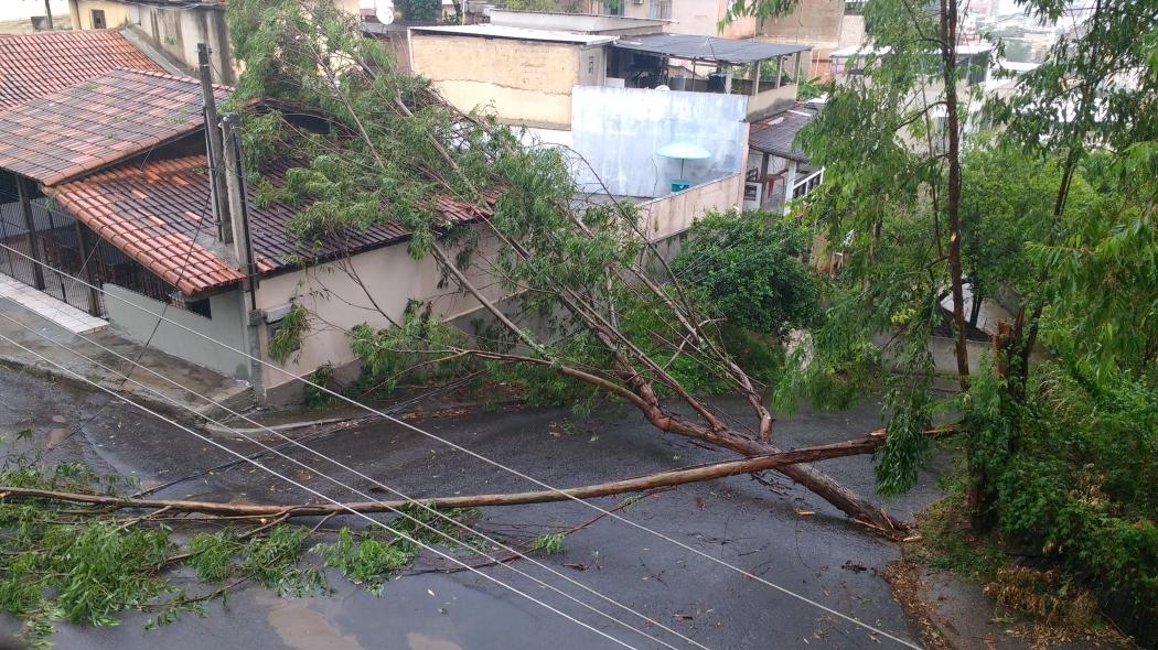 Árvore caiu sobre restaurante no Abelardo Machado. Crédito: Danielle Pereira