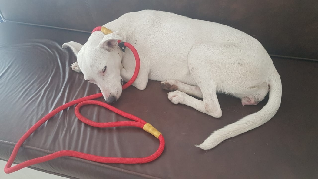 Primeira cadela resgatada no Penedo. Crédito: Clara Orlandi