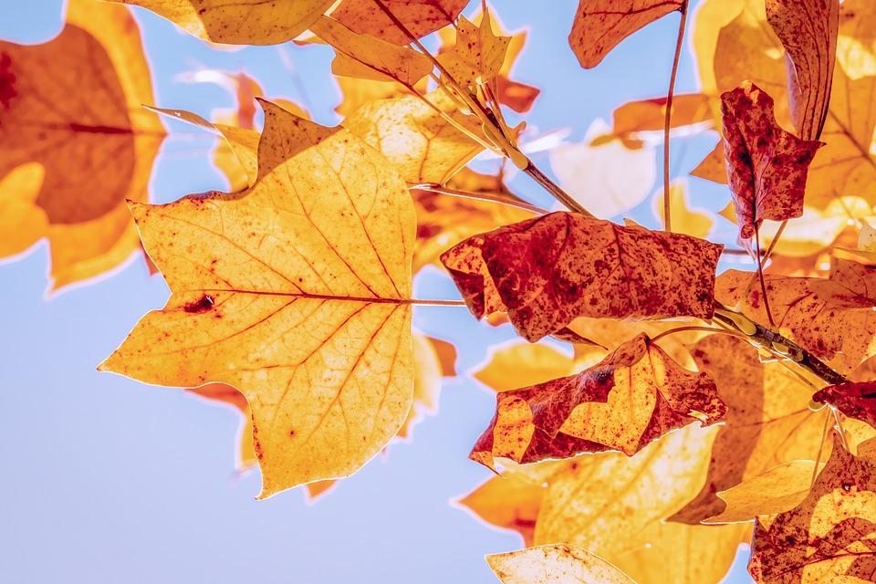 Outono deve ser de temperaturas amenas e poucas chuvas. Crédito: @Couleur   Pixabay