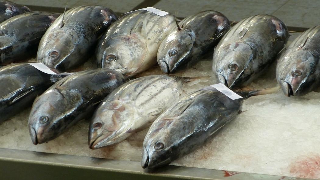 Peixes, como o atum, vendidos pelo Estado não poderão ser enviados por portos e terminais capixabas. Precisarão ir para outras regiões para serem exportado. Crédito: Pixabay