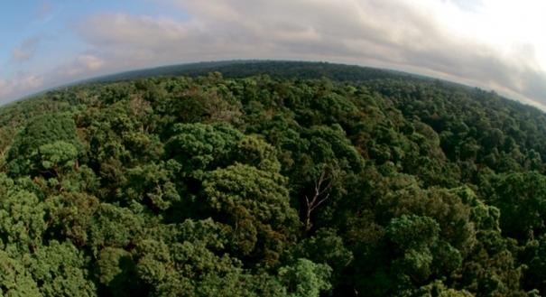 Preservação da floresta e o Código Florestal