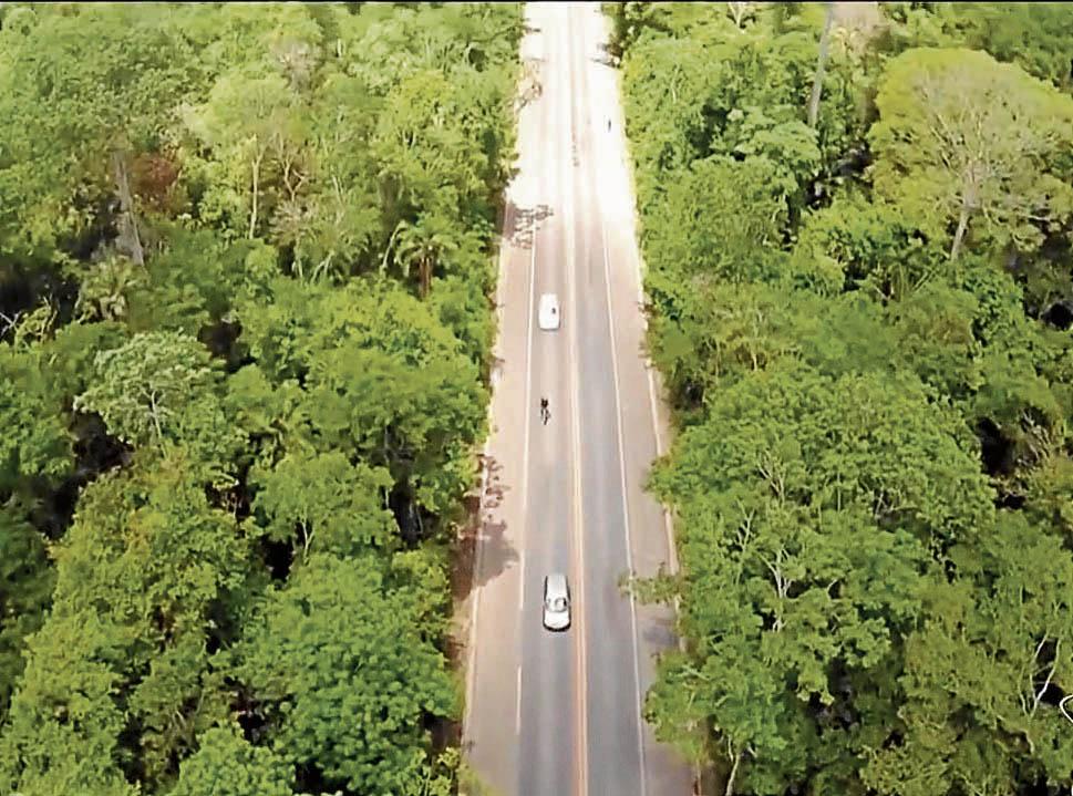 BR 101 corta a Reserva Biológica de Sooretama, no Norte do Espírito Santo. Crédito: Imagem | TV Gazeta