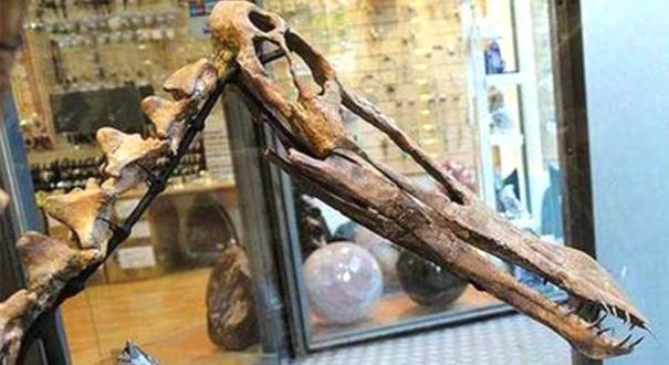 Fóssil de pterossauro anunciado em loja do eBay. Crédito: Ascom MPF | Divulgação
