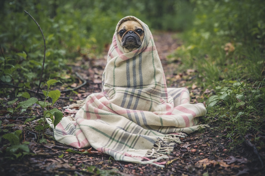 Espere por mim, escreve tutor ao se despedir do cachorro Thanos. Crédito: Pixabay