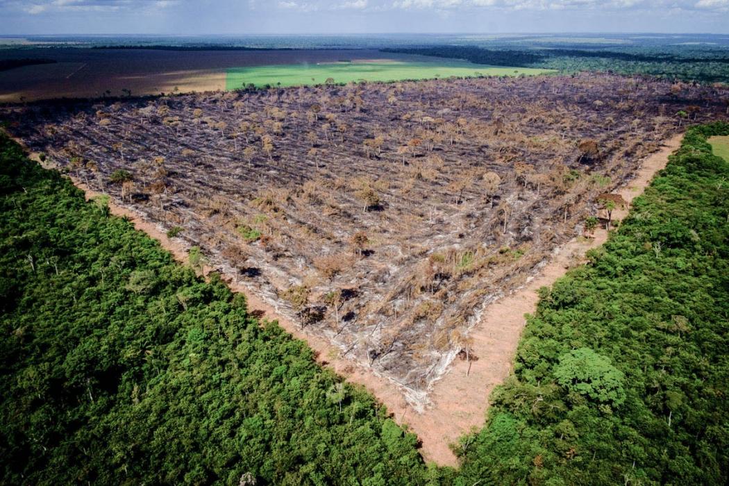 Desmatamento na Amazônia em agosto cresce 222% em relação ao mesmo mês de 2018. Crédito: Mayke Toscno/Gcom-MT