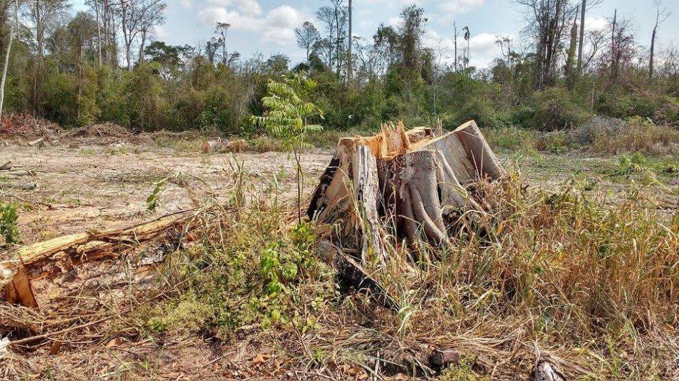 Desmatamento no Brasil. Crédito: Divulgação