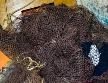 Pescado apreendido foi devolvido ao ambiente aquático (Ampliar imagem). Crédito: Reprodução/PMV