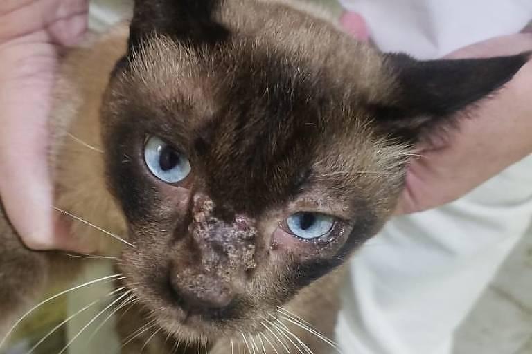 Um dos gatos que estavam com mulher acusada de maus-tratos. Crédito: Divulgação/Polícia Civil