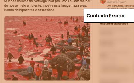 Foto de matança de baleias foi tirada em território dinamarquês. Crédito: comprova