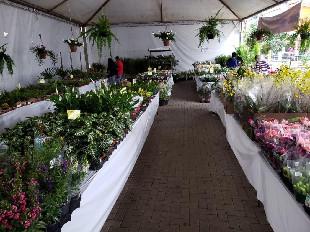 Cariacica Realiza Feira Com Mais De 300 Espécies De Flores