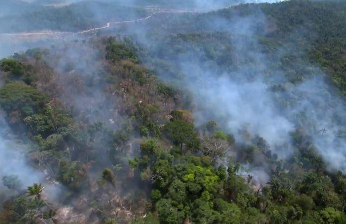 Fundos que administram R$ 65 trilhões pedem ao Brasil que proteja Amazônia. Crédito: Reprodução/TV Globo