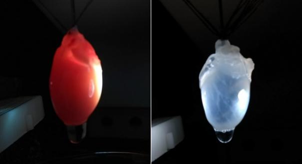 Coração antes e depois . Crédito: Divulgação