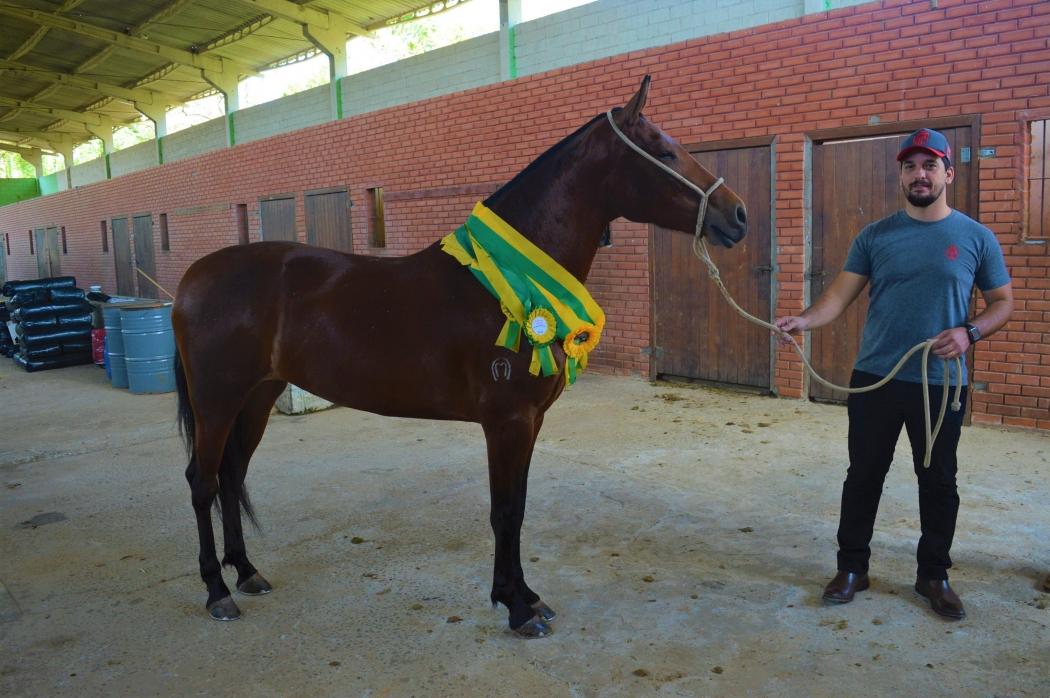 A jovem égua A égua Brasa do Évora do Caballero é uma das estrelas da 29ª Exposição Estadual Capixaba do Cavalo Mangalarga Marchador, em Vila Velha. Crédito: Clovis Rangel/Divulgação
