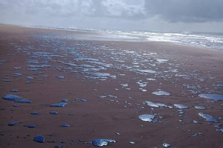 Mancha de óleo atinge 39 praias do litoral nordestino. A praia de Ponta dos Mangues, em Sergipe, foi uma delas. Crédito: Divulgação   Brenda Dantas